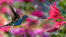 23 Nature Pictures To Take Your Breath Away