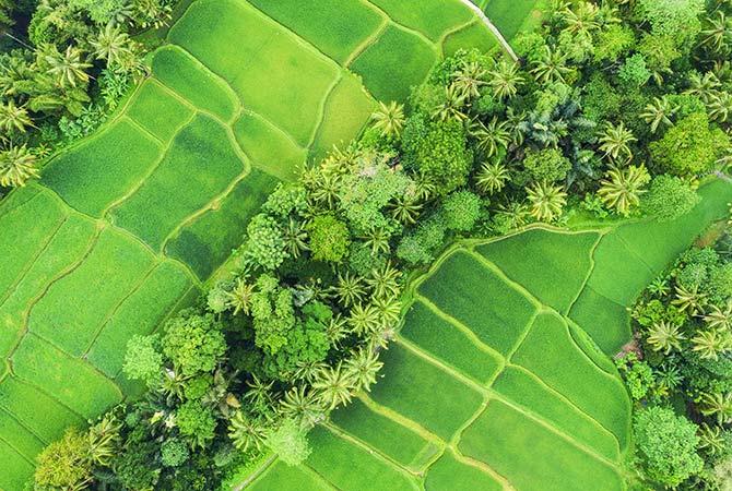 无人机摄影的稻田