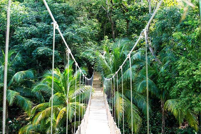 amazing adventures in jungles