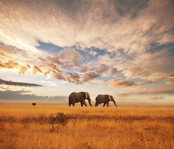 safari amazing adventures