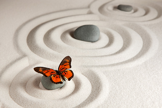 butterfly zen pictures