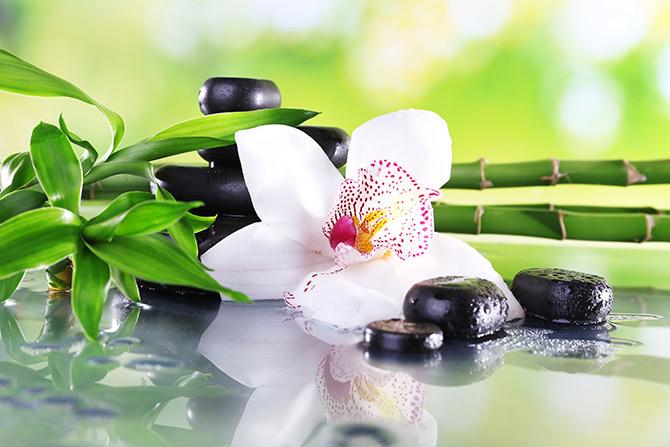 bamboo zen pictures