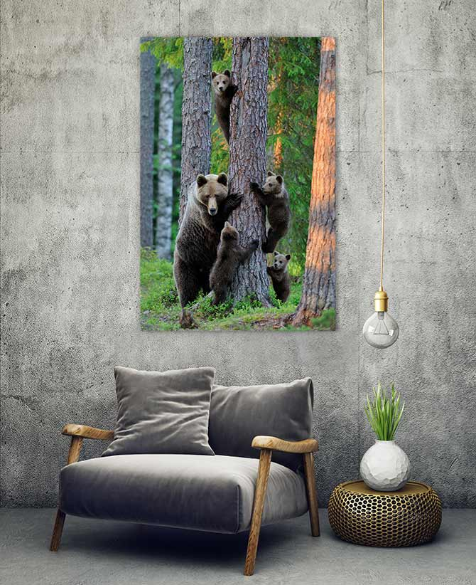 wildlife art of bears