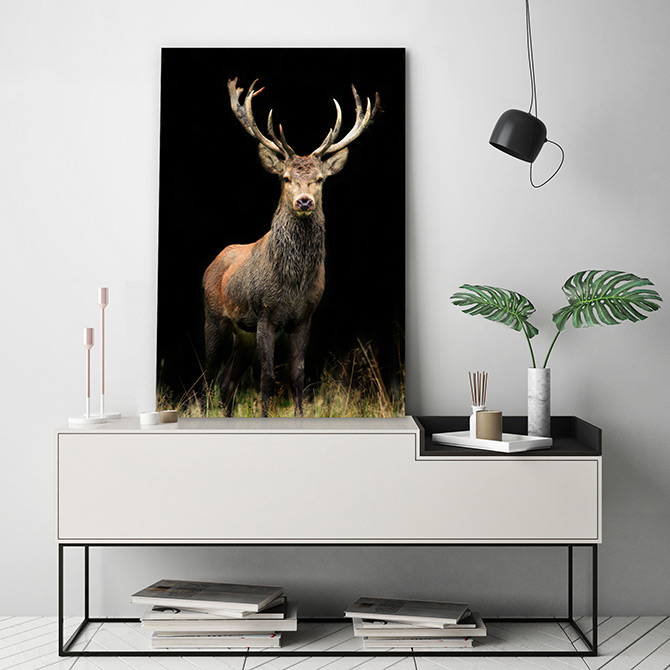 deer wildlife art