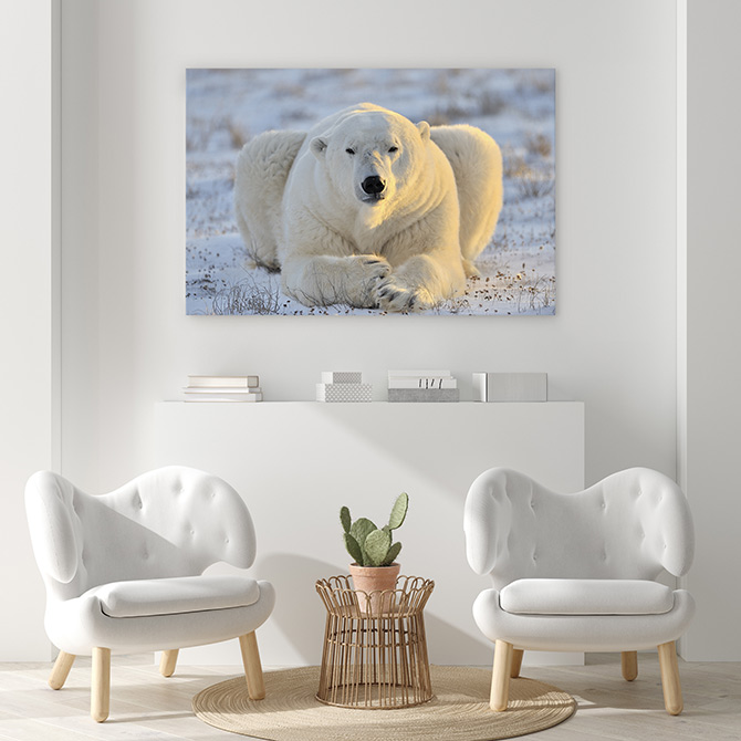 wildlife art of polar bears