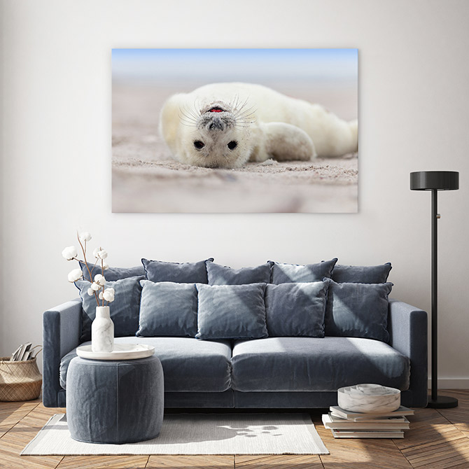 wildlife art of seals