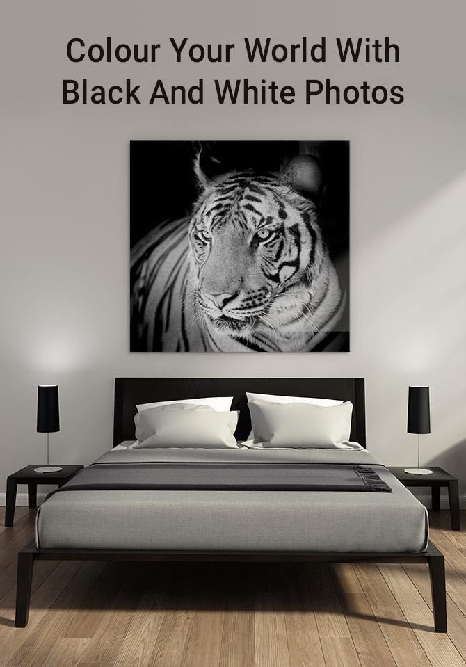 用黑白照片上色你的世界