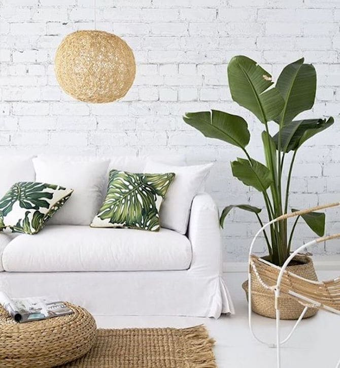 Room Design Ideas - White And Greenery Plants