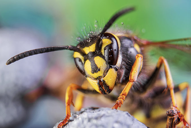 Macro Photography - Insects
