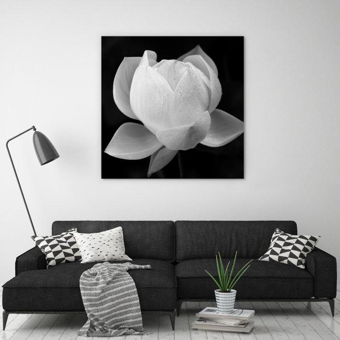 monochrome photography artwork