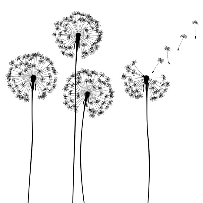 popular prints in black and white
