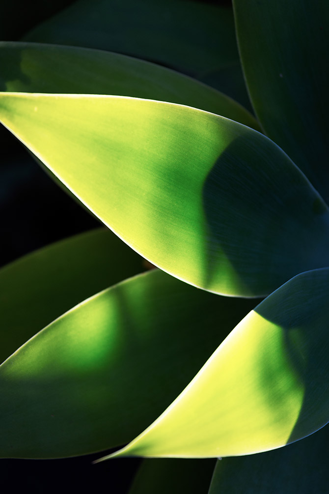 minimalist photography - plants
