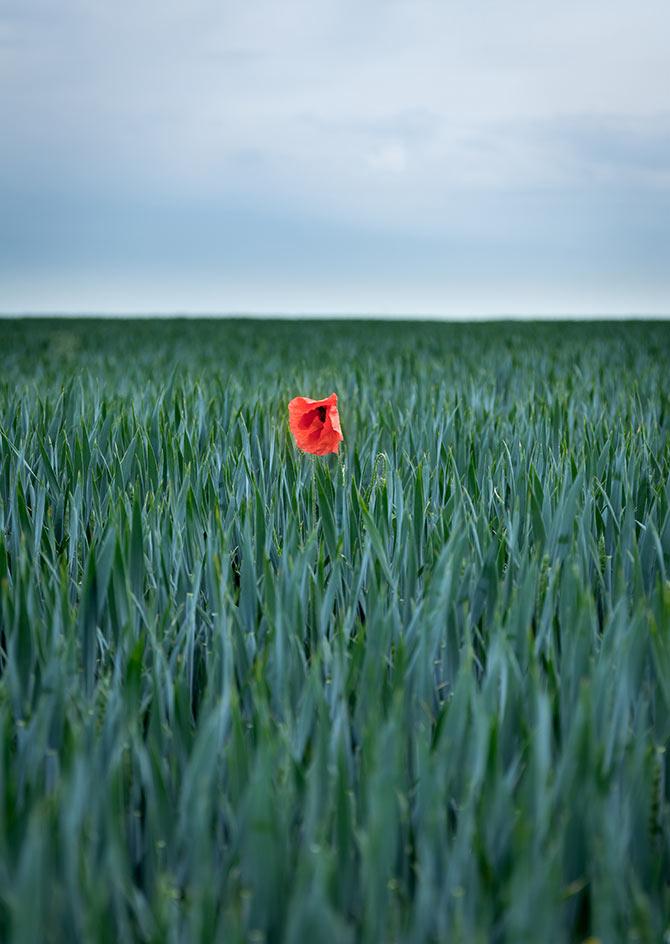minimalist photography ideas