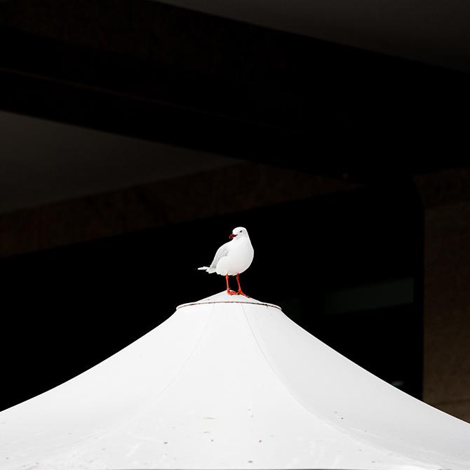 minimalist photography art