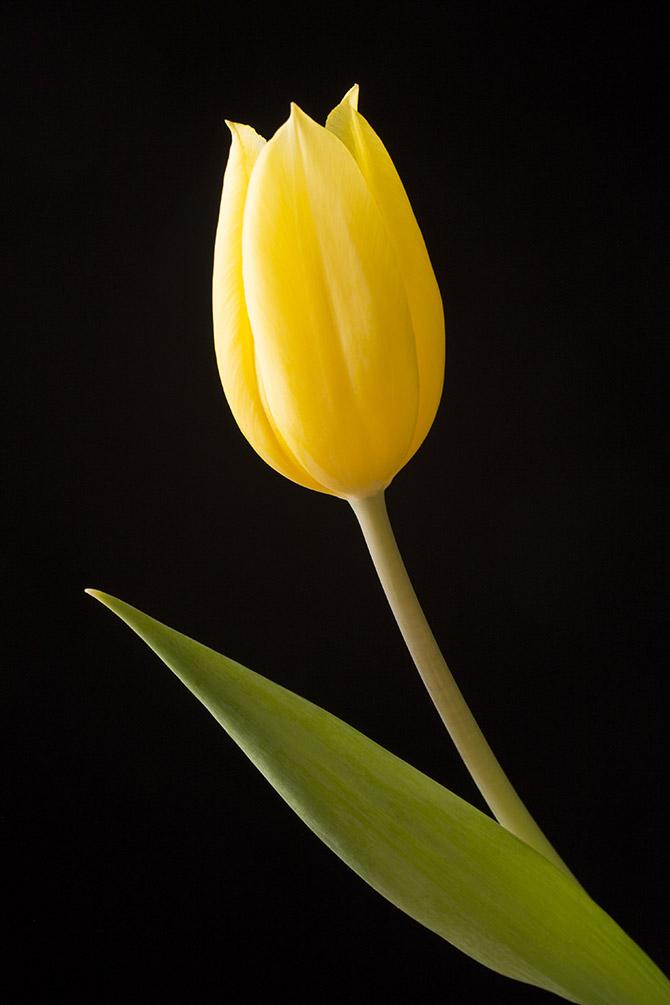 Minimalist photography of plants
